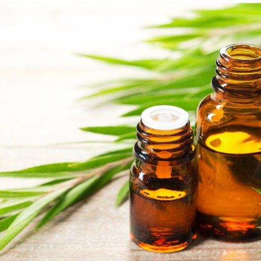 Tinh dầu Tràm Trà Nguyên Chất 100% | Tea Tree Essential Oil Pure 100%